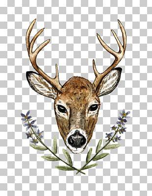 Elk Red Deer Antler White-tailed Deer PNG