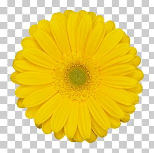 Flower Stock Photography Stock.xchng PNG