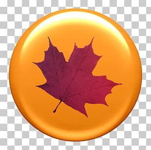 Paper Maple Leaf Autumn Leaf Color PNG