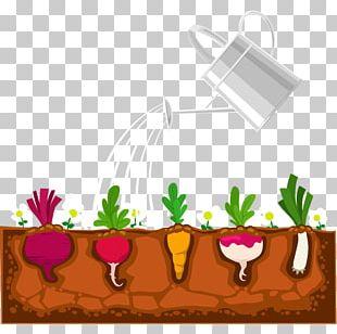 Plant Garden Devils Ivy Shrub PNG
