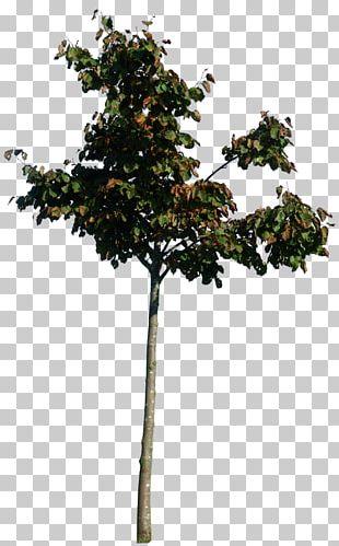 Twig Tree PNG