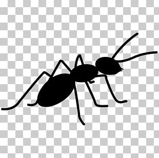 Ant Insect Bee PNG