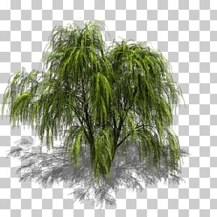 Tree Weeping Willow Sprite Isometric Graphics In Video Games And Pixel Art PNG