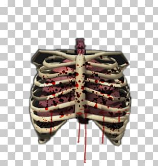 Human Skeleton Bone Rib Cage Human Body PNG