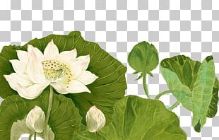Nelumbo Nucifera Ink PNG