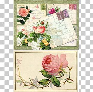 Floral Design Garden Roses Cut Flowers Greeting & Note Cards PNG