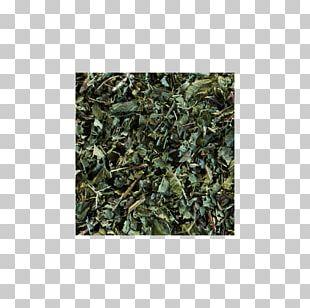 Sencha Green Tea Gunpowder Tea Oolong PNG
