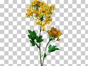 Twig Cut Flowers Plant Stem Shrub Herb PNG