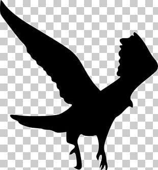 Bird Bald Eagle Gulls Silhouette PNG