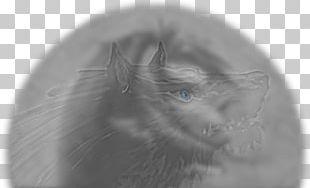 Optical Illusion Optics Eye PNG