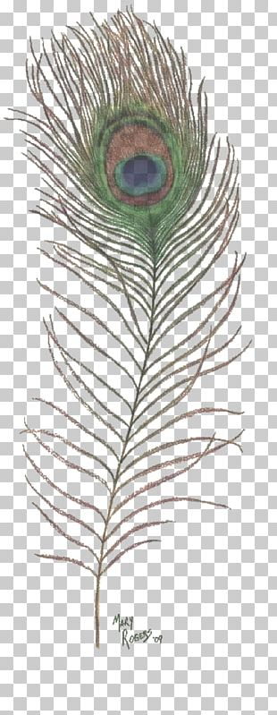 Drawing Feather Peafowl Art PNG