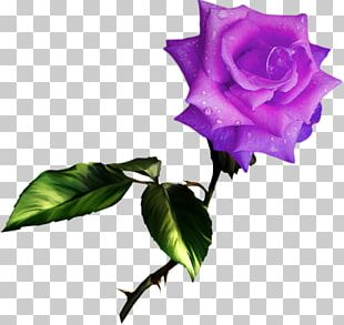 Best Roses PNG