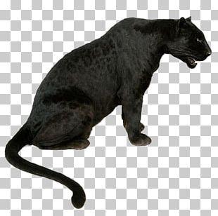 Leopard Tiger Jaguar Black Panther Lion PNG