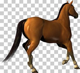 American Paint Horse Foal Pony PNG