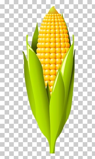 Corn On The Cob Maize Cereal PNG