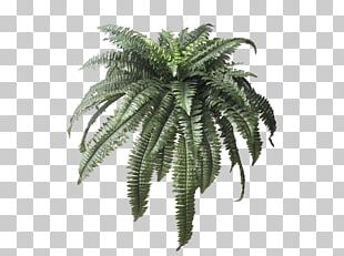 Maidenhair Fern Leaf Plant Arecaceae PNG