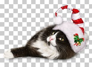 Cat Whiskers Kitten Christmas Ornament Christmas Day PNG