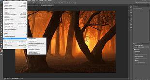 Desktop Display Resolution High-definition Video Forest PNG