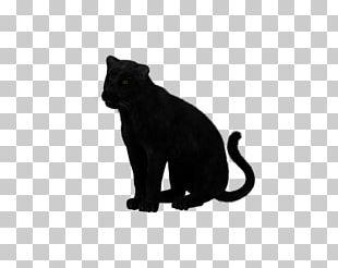 Black Panther Felidae Cat Leopard Cougar PNG
