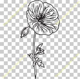 Floral Design Cut Flowers Petal Drawing PNG