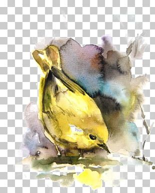 Bird Watercolor Painting Drawing PNG
