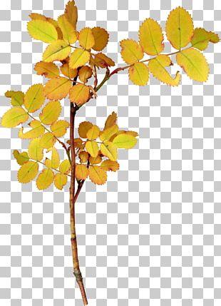 Twig Leaf Plant PNG