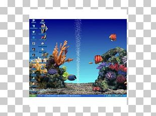 Coral Reef Fish Majorelle Blue Ecosystem Majorelle Garden PNG