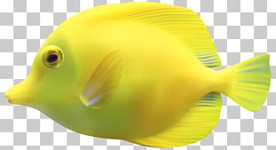 Fish Iridescent Shark PNG