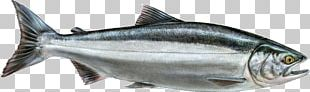 Thunnus Smoked Salmon Sardine Fish Products PNG