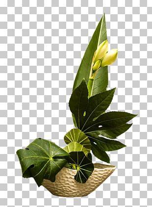 Floral Design Birthday Flowerpot Daytime PNG