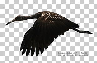 Vulture Water Bird Crane Beak PNG