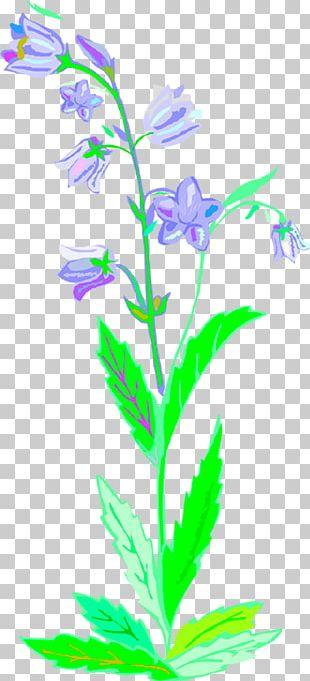Plant Stem Leaf Lilac Flowering Plant PNG