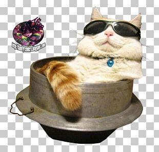 Cat Sunglasses Kitten Felidae PNG