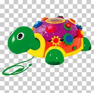 Turtle Educational Toys Child Toddler PNG