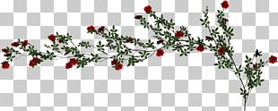 Beach Rose Vine PNG
