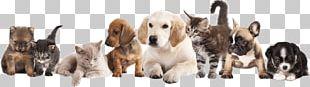 Puppy Pet Sitting Dog Kitten PNG