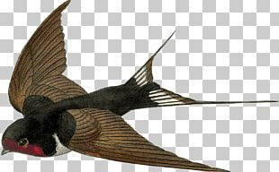 Barn Swallow Bird Sparrow PNG