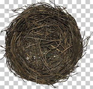 Bird Nest Edible Bird's Nest Nesting Season PNG