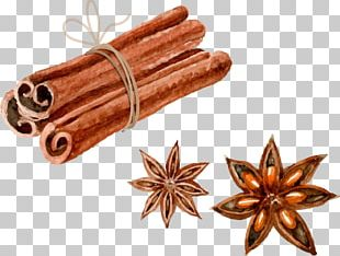 Euclidean Watercolor Painting Star Anise PNG