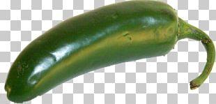 Serrano Pepper Jalapeño Poblano Pasilla Cayenne Pepper PNG