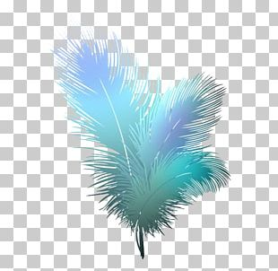 Bird Feather PNG