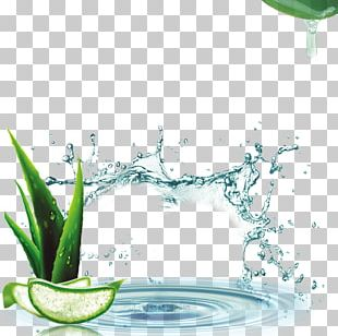 Lotion Aloe Vera Cream Cosmetics PNG