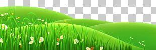 Meadow Euclidean PNG