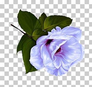 Flower Garden Roses Desktop PNG