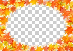 Autumn Leaf Color Drawing PNG