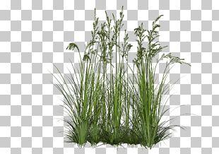 Shrub Plant PNG