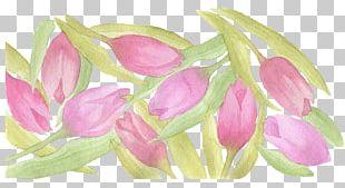 Tulip Watercolor Painting PNG