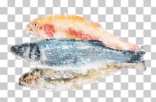 Sardine Fish Products Pacific Saury Oily Fish PNG