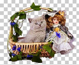 Kitten Cat Felidae Whiskers PNG
