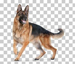 German Shepherd Puppy Purebred Dog Dog Food Dog Breed PNG